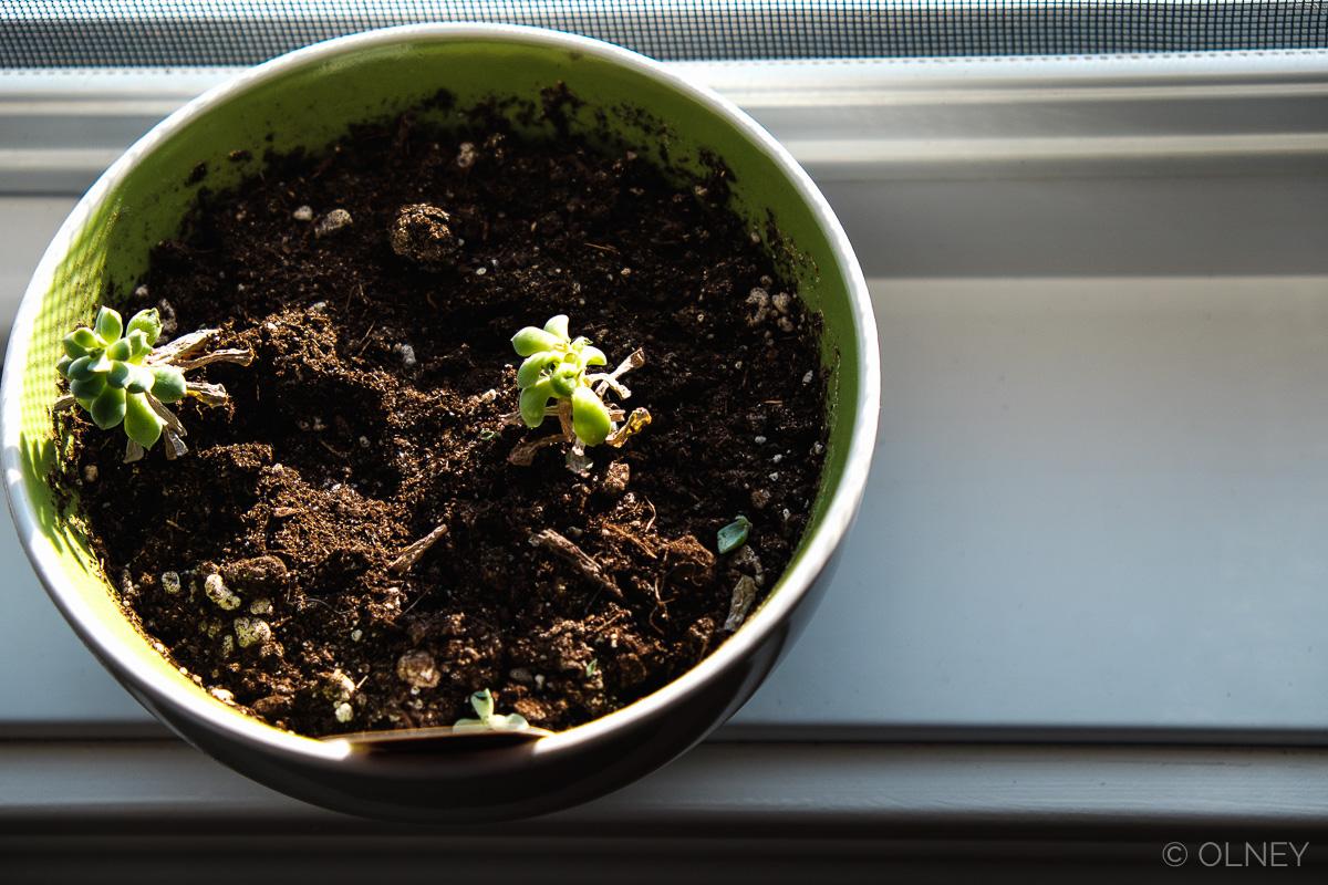 Tiny plant on window sill olney photographe sherbrooke