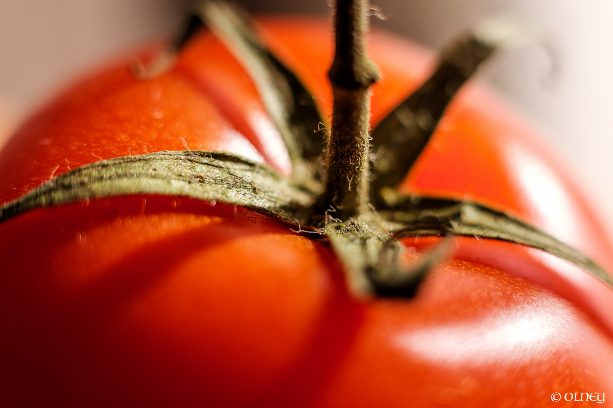 Tomato close-up macro photography olney photographe sherbrooke