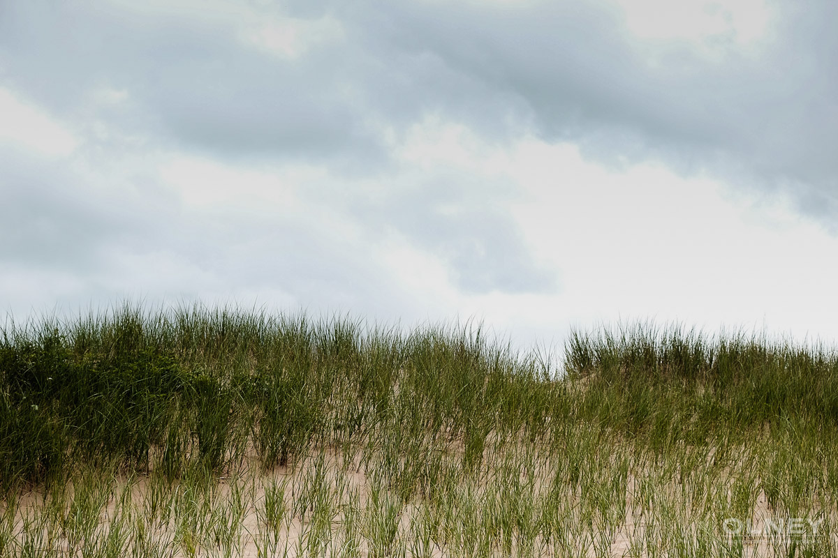 Dunes and weed in Cavendish PEI olney photographe sherbrooke