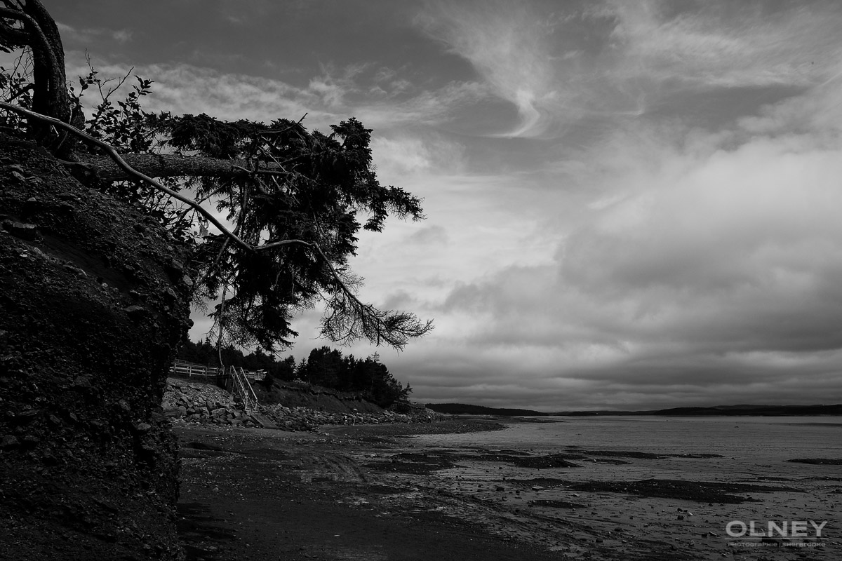 Tree and rocks in Hopewell black and white olney photographe sherbrooke