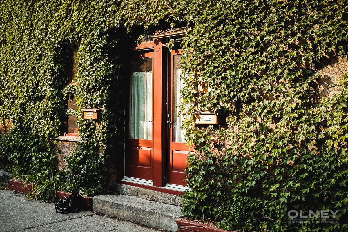 Ivy on house in montreal olney photographe sherbrooke