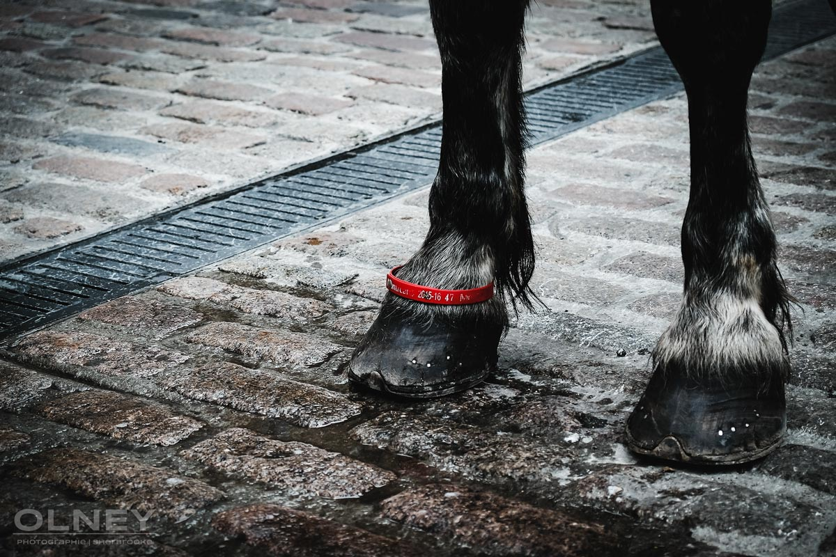 Hoofs of a carriage horse in Montreal