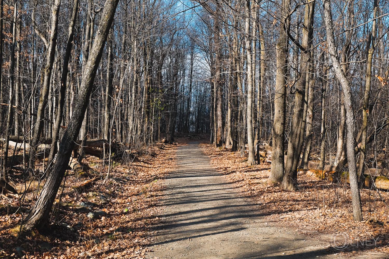 sentier du bois beckett à Sherbrooke QC en Estrie