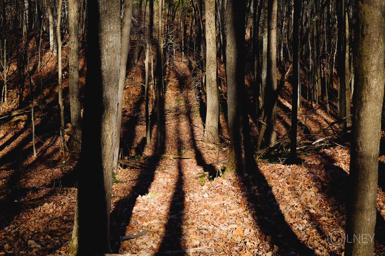 sous-bois au bois beckett sherbrooke QC en Estrie