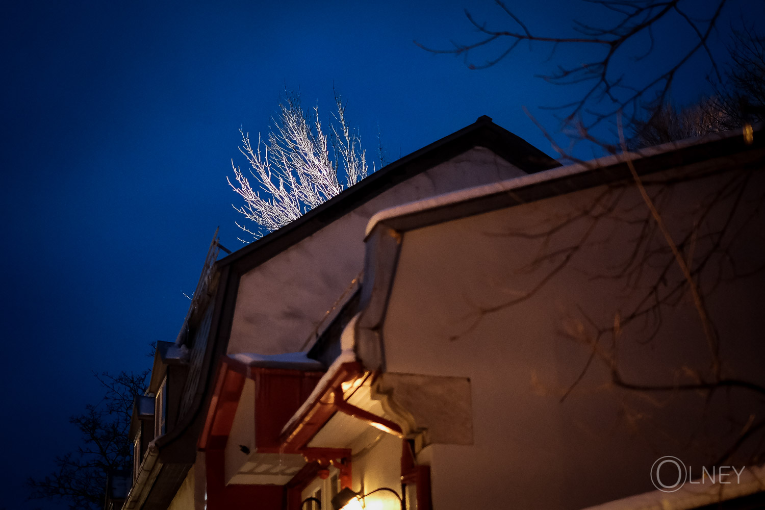 illuminated tree branches in old quebec city