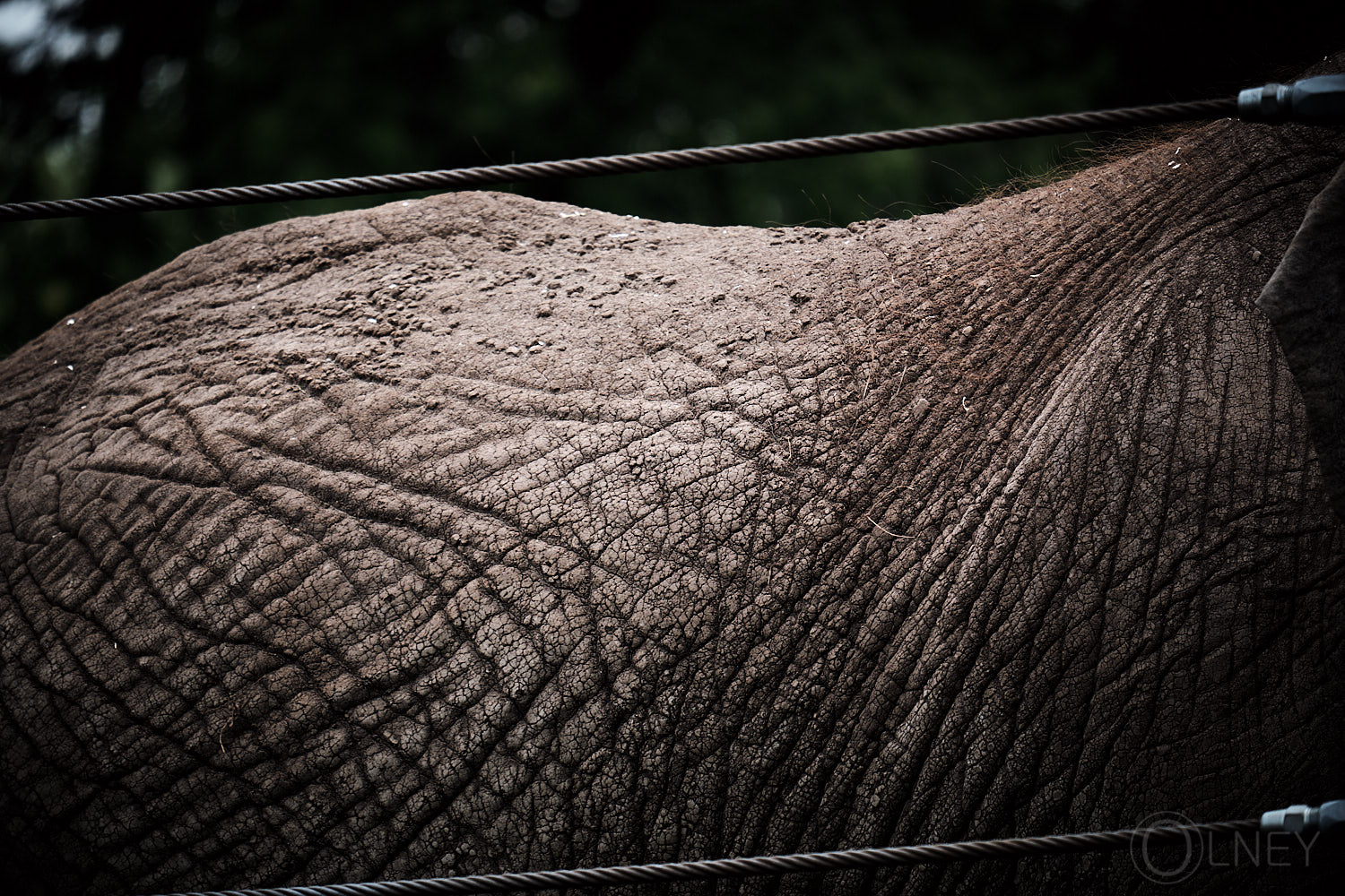 elephant back at granby zoo