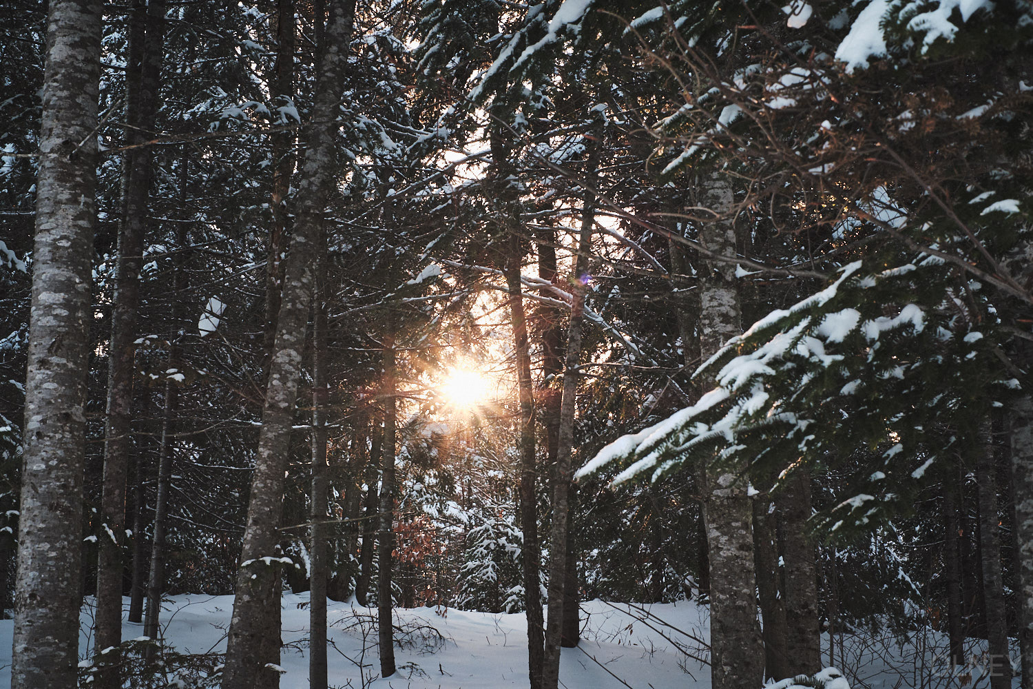 sun through trees in winter