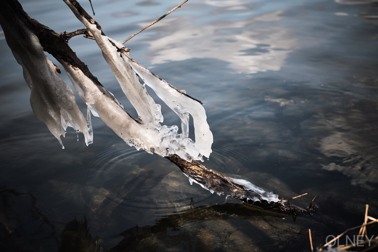 ice on a branch dipped in a lake