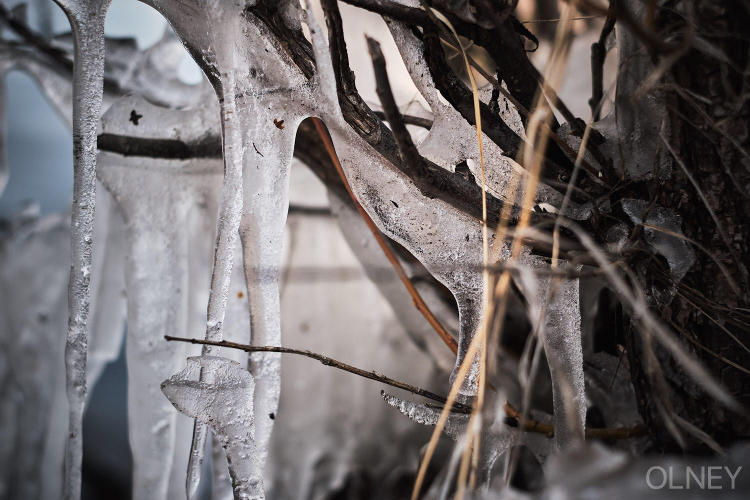 icicles on branches