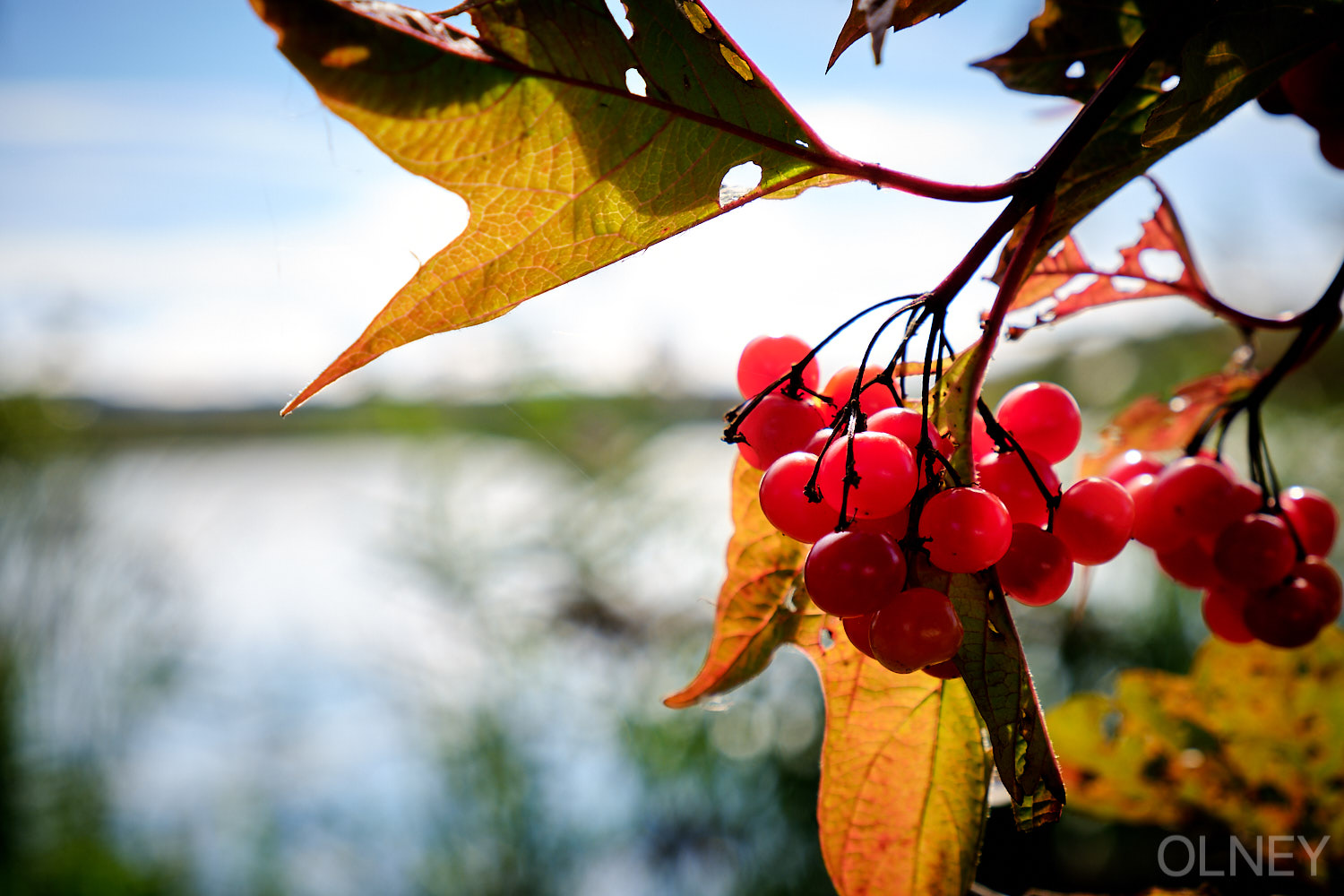 fall foliage and fruits at etang burbank