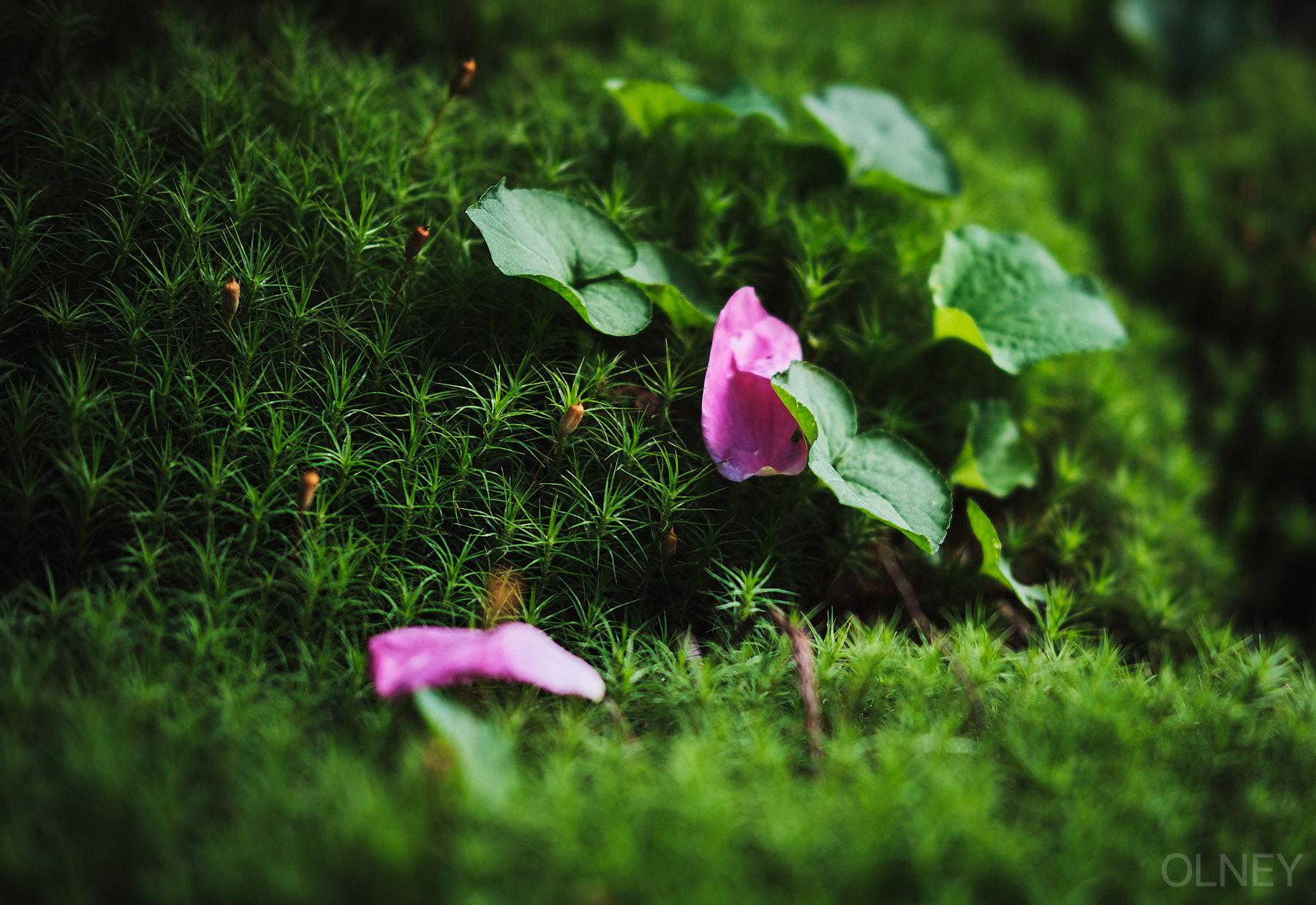 OLNEY-jardin et trottoir-01.jpg