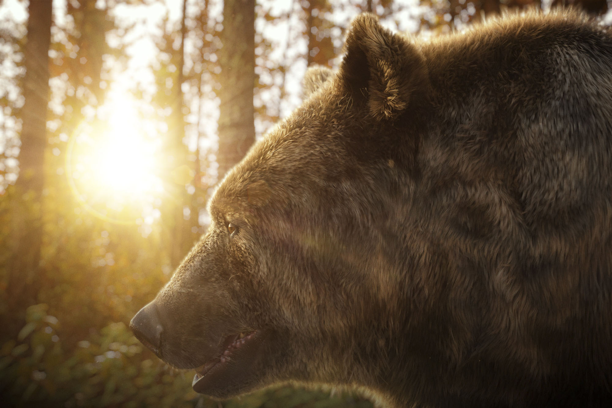 bear-in-the-woods