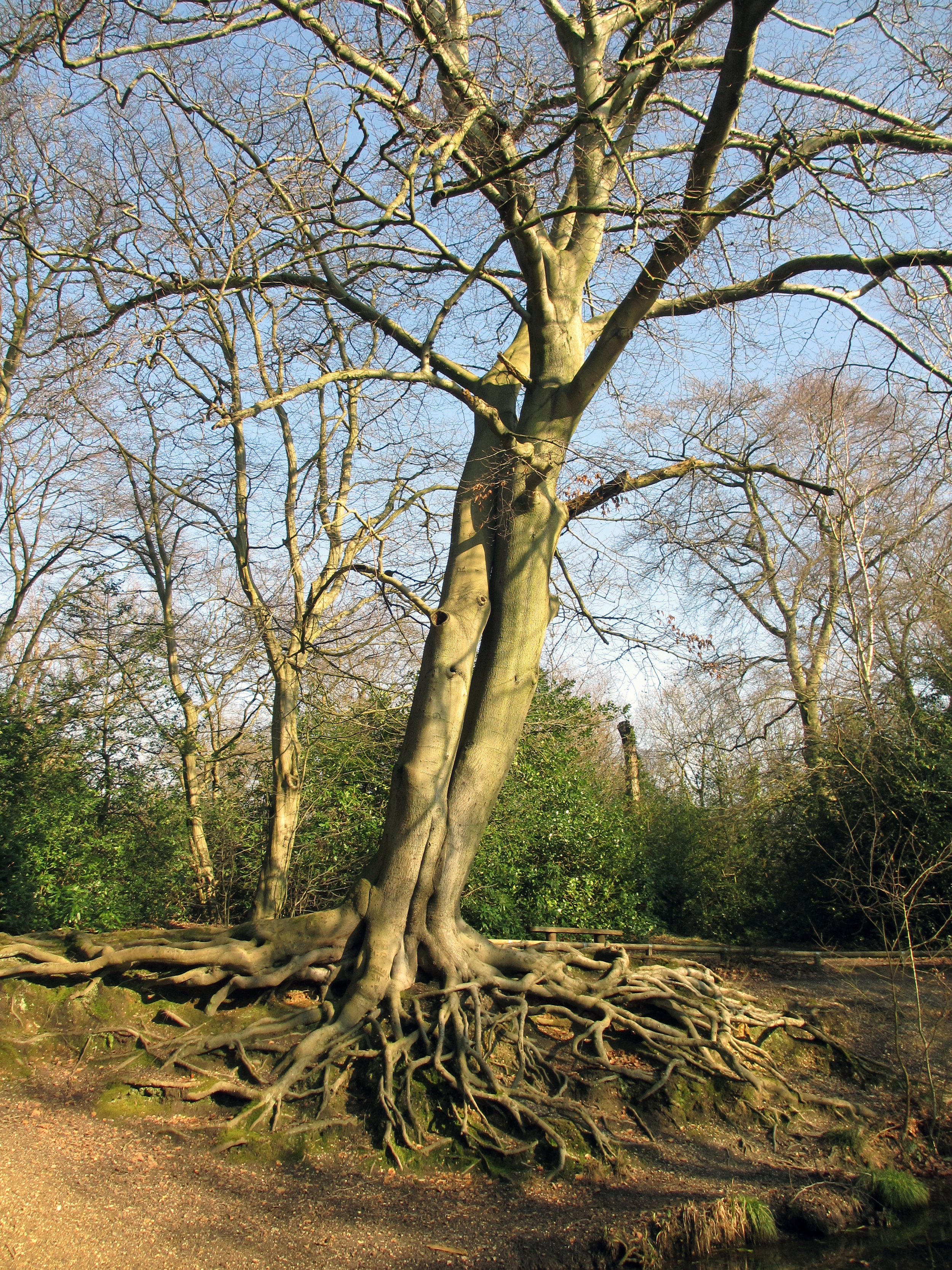 By Nature or Design -Picturesque Tree Planting in the 19th Century