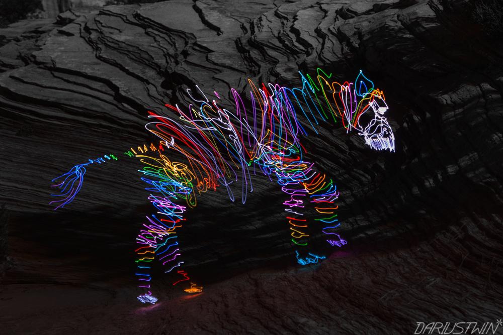 Zion Zebra