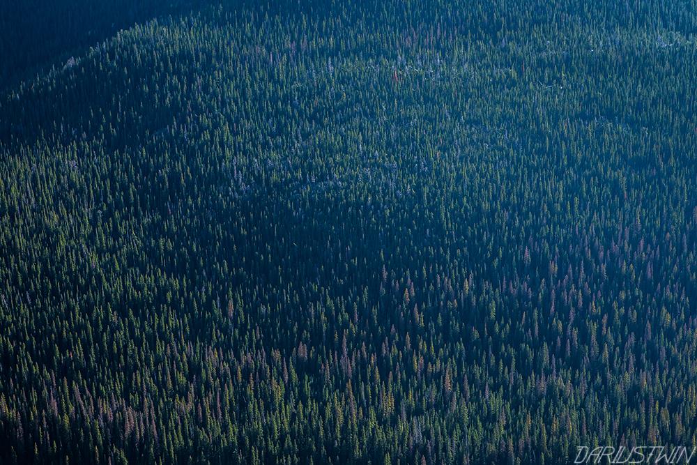 Treeline Below