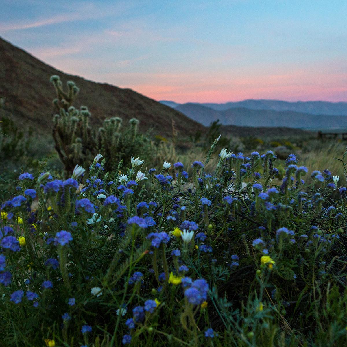 desertflowers_4490.jpg