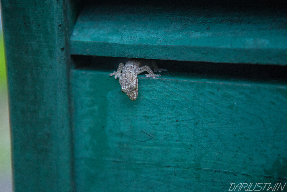 GeckoSneak_DT.jpg