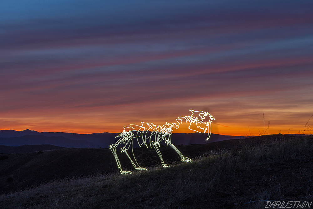 sabretooth_sabretoothedcat_dariustwin_iceage_fossil_lightfossil_darren_pearson_sunset_photography_lowlight_longexposure_nature_art.jpg