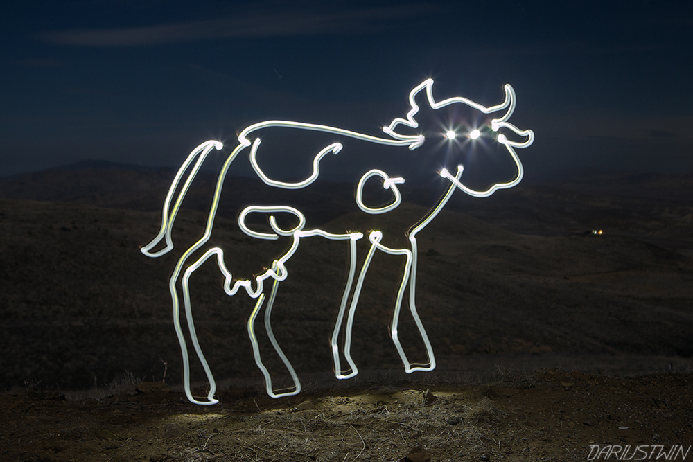 cow_drawing_dairy_lightpainting_art_dariustwin_night_photography.jpg