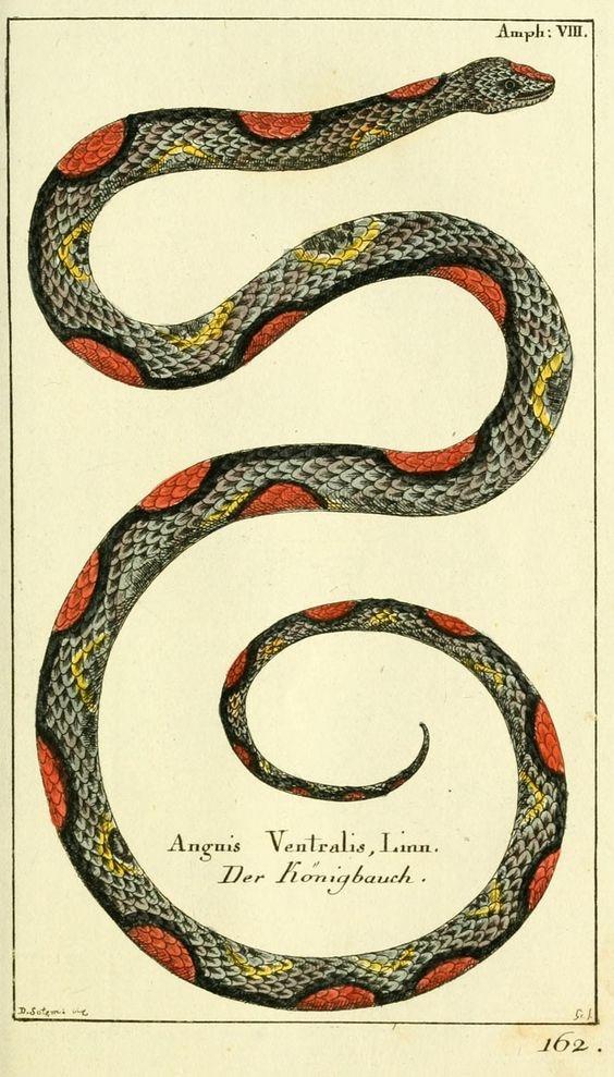 AriesFullMoon18.Snake.Borowski.jpg