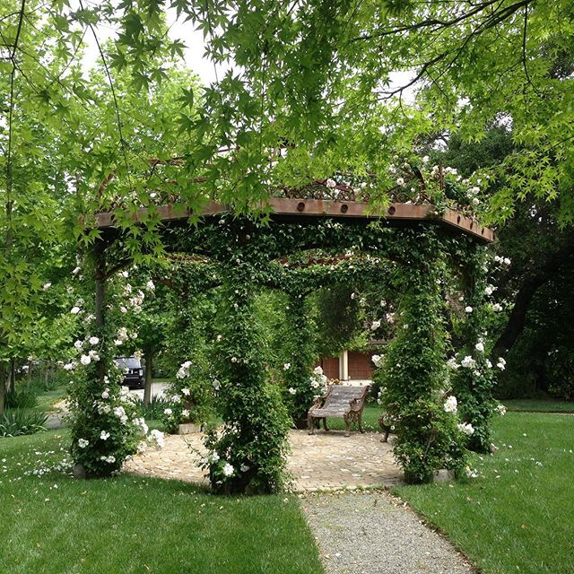Roses on an old French trellis with a cobble stone sitting area.