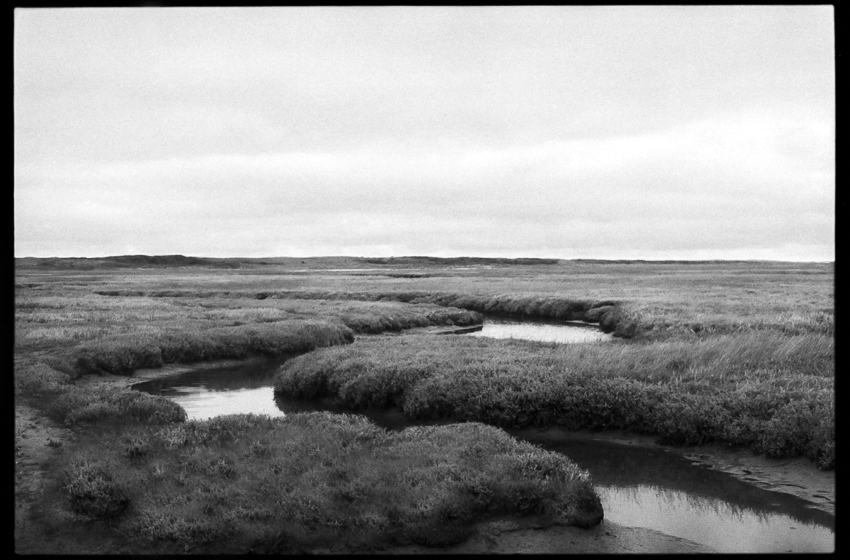 Swamp, Texel, The Netherlands
