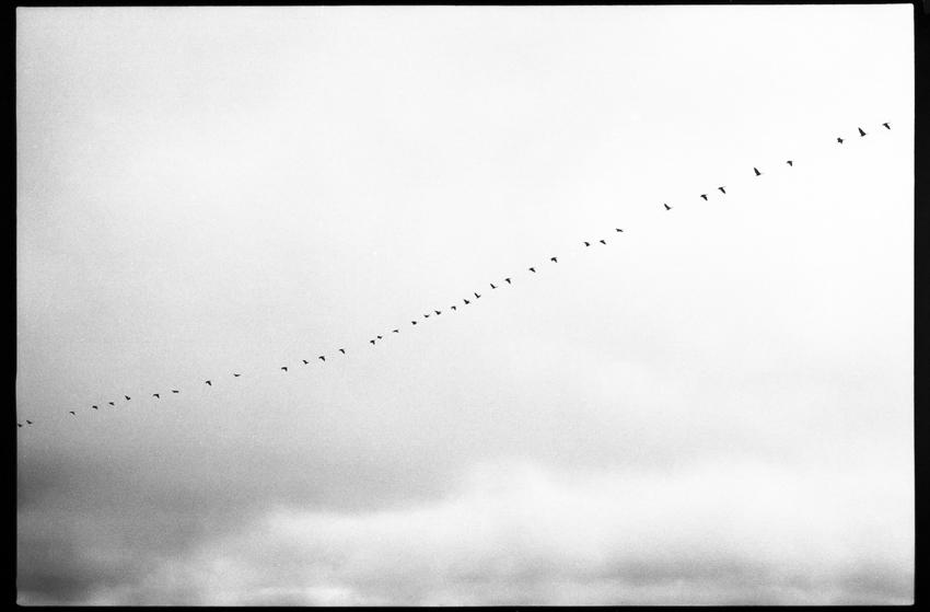 Birds, Texel, The Netherlands