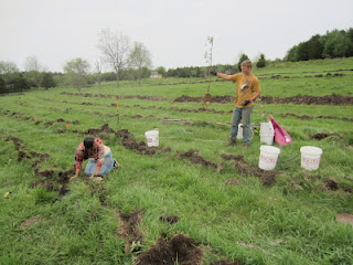 Planting+trees+before+the+storm+-+Spring+2012.JPG
