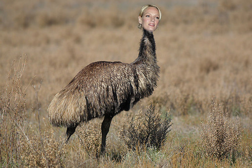 Emu Thurman