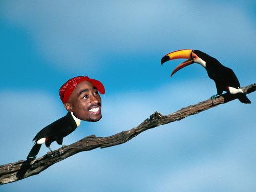 Toucan Shakur