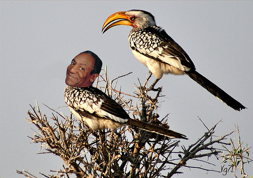 Hornbill Cosby