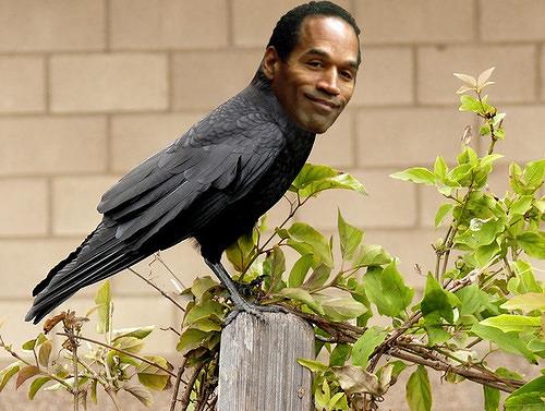 Crow J. Simpson