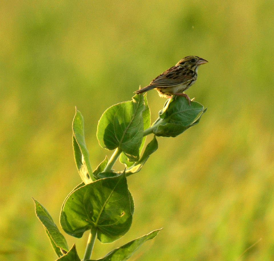 prairie-bird-becky.jpg
