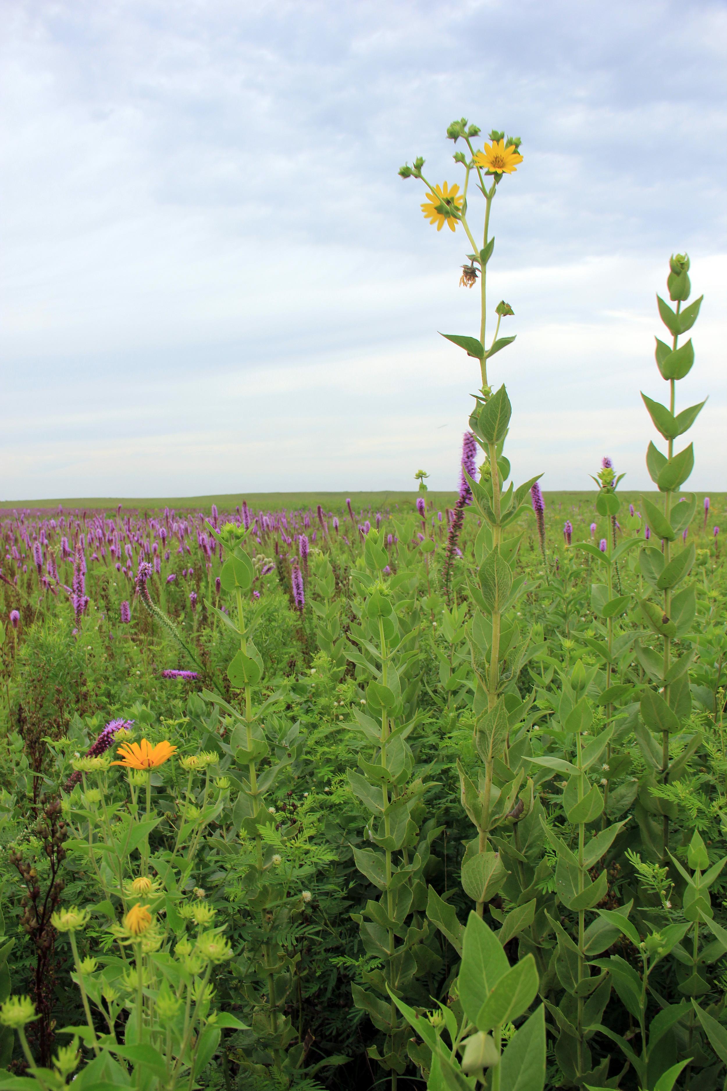 prairie-pic-3-jeff.jpg