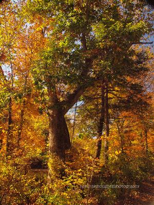 fall at drury mincy ca ann bweb.jpg