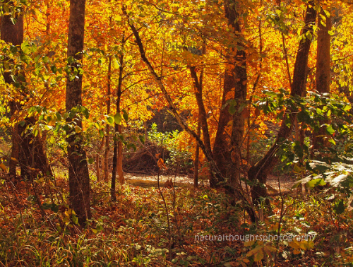 Fall along Bee Creek