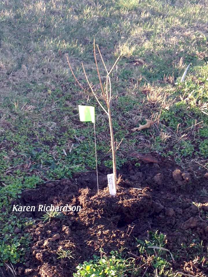 Plantings identified