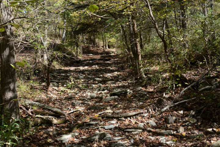 Chinquapin Trail