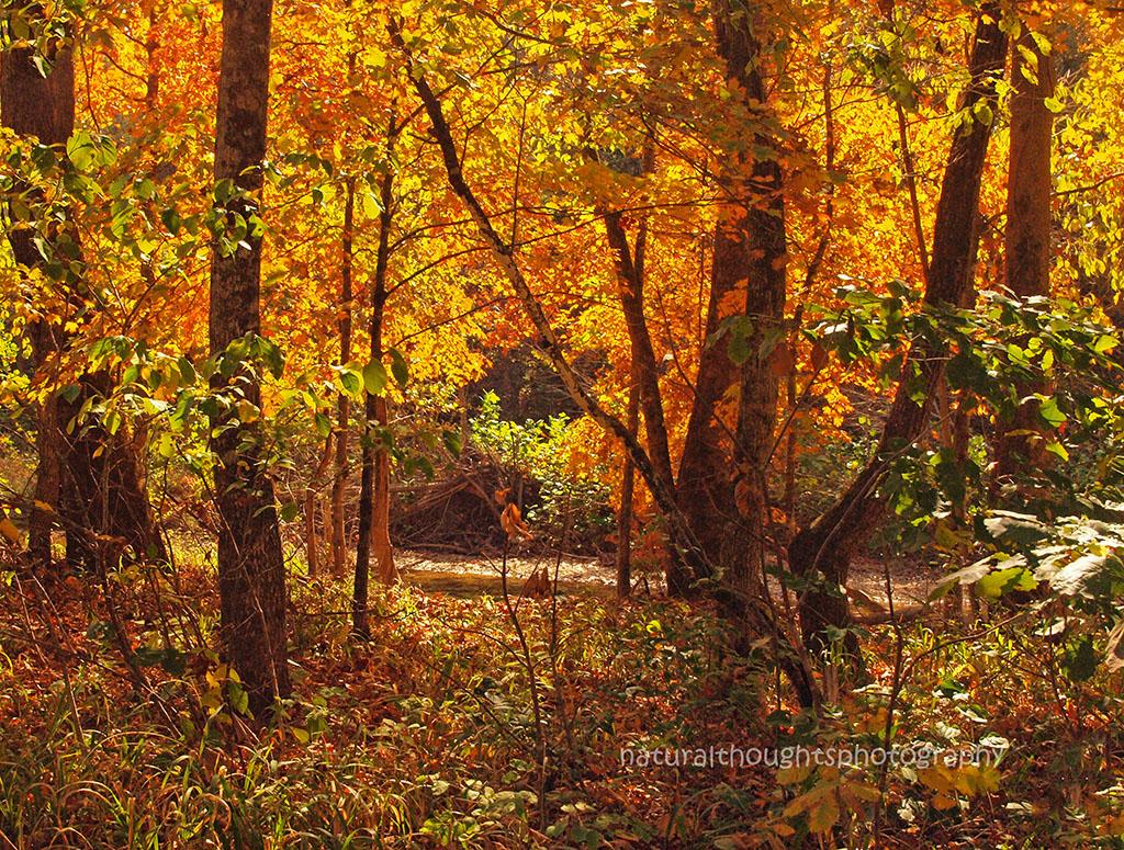 fall at bee creek ab web.jpg