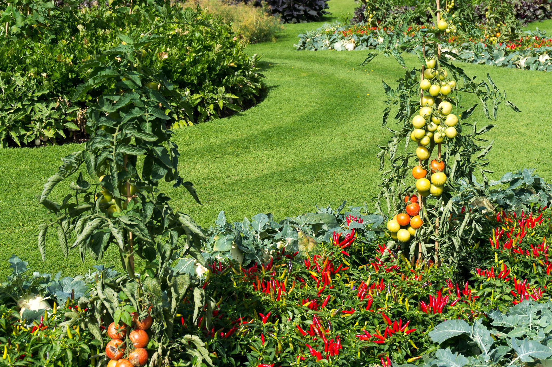 Beacon Vegetable Gardens.jpg