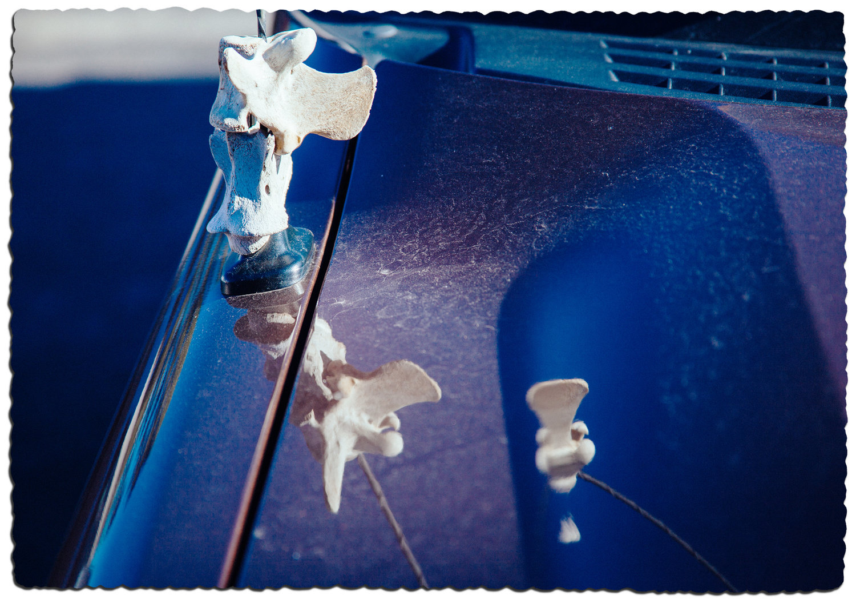 Kevin Hoth - bone antenna, archival digital pigment print, 2016