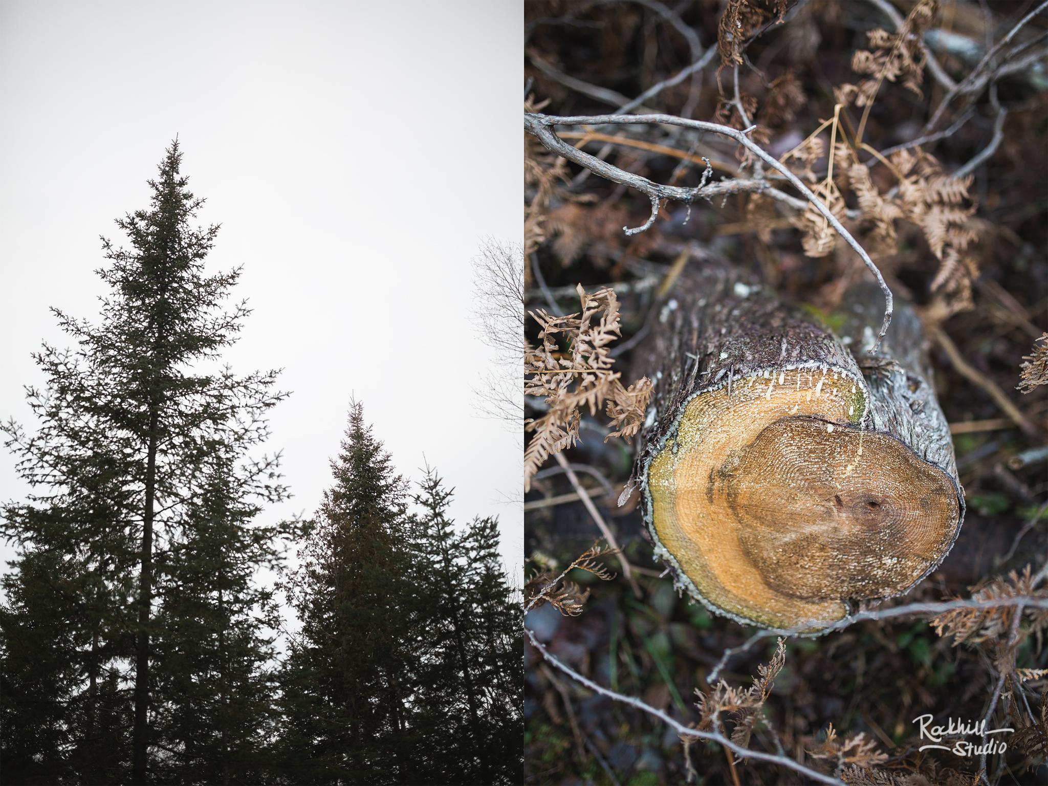 rockhil-studio-christmas-tree-tradition-7.jpg