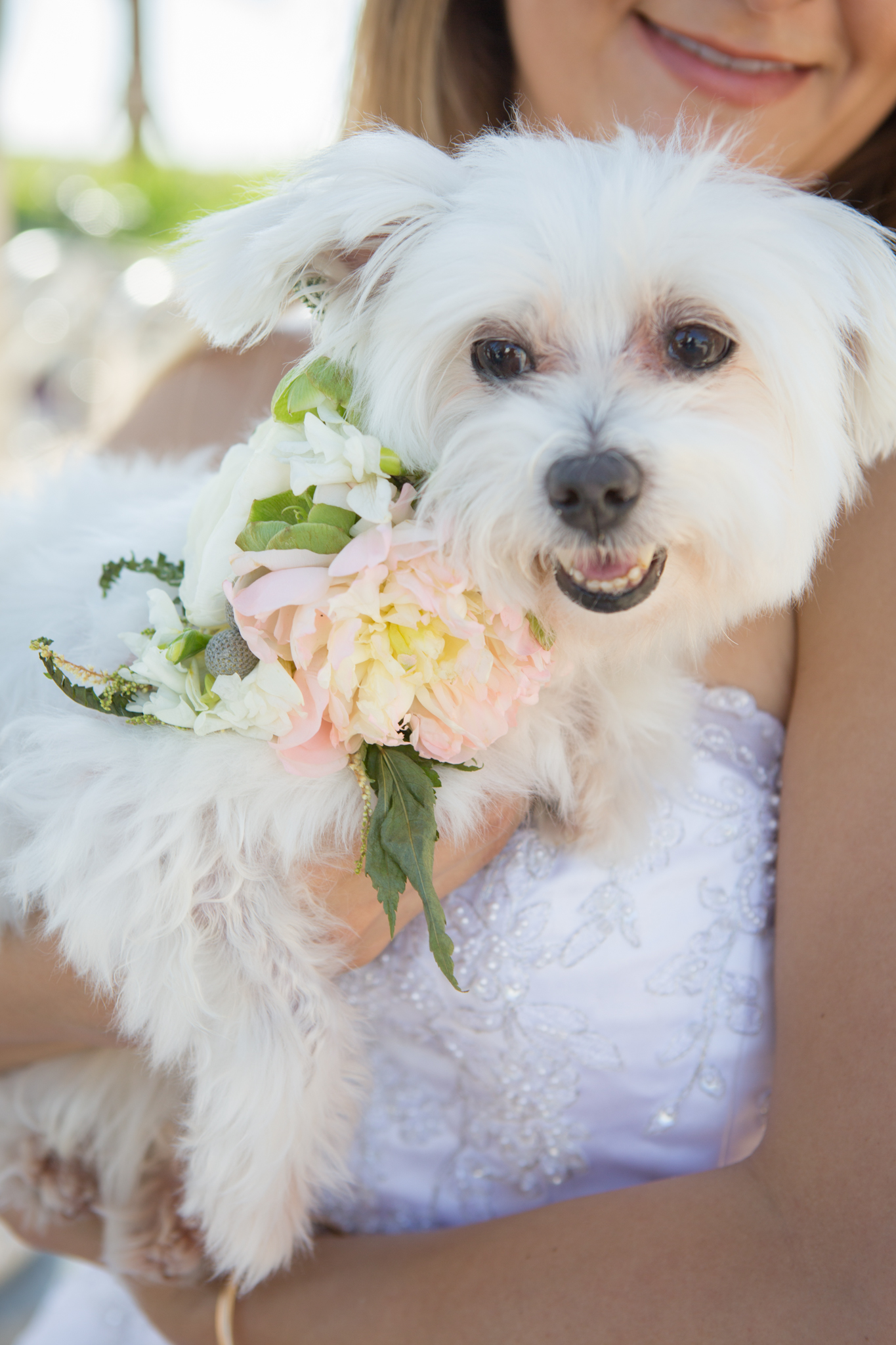 Close-up of Coco the dog with bridal floral collar at beach wedding