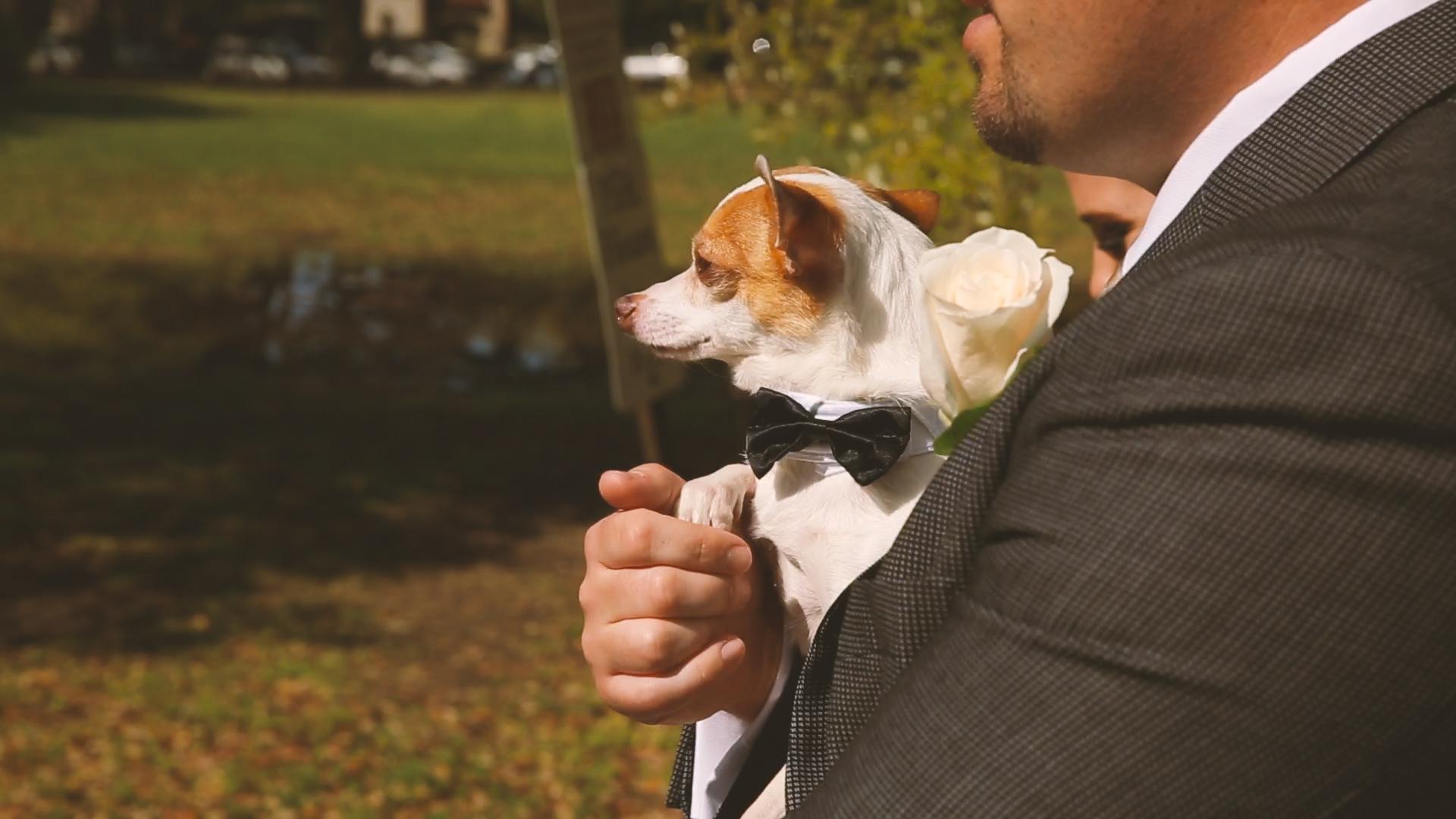 Puppy - Bride Film