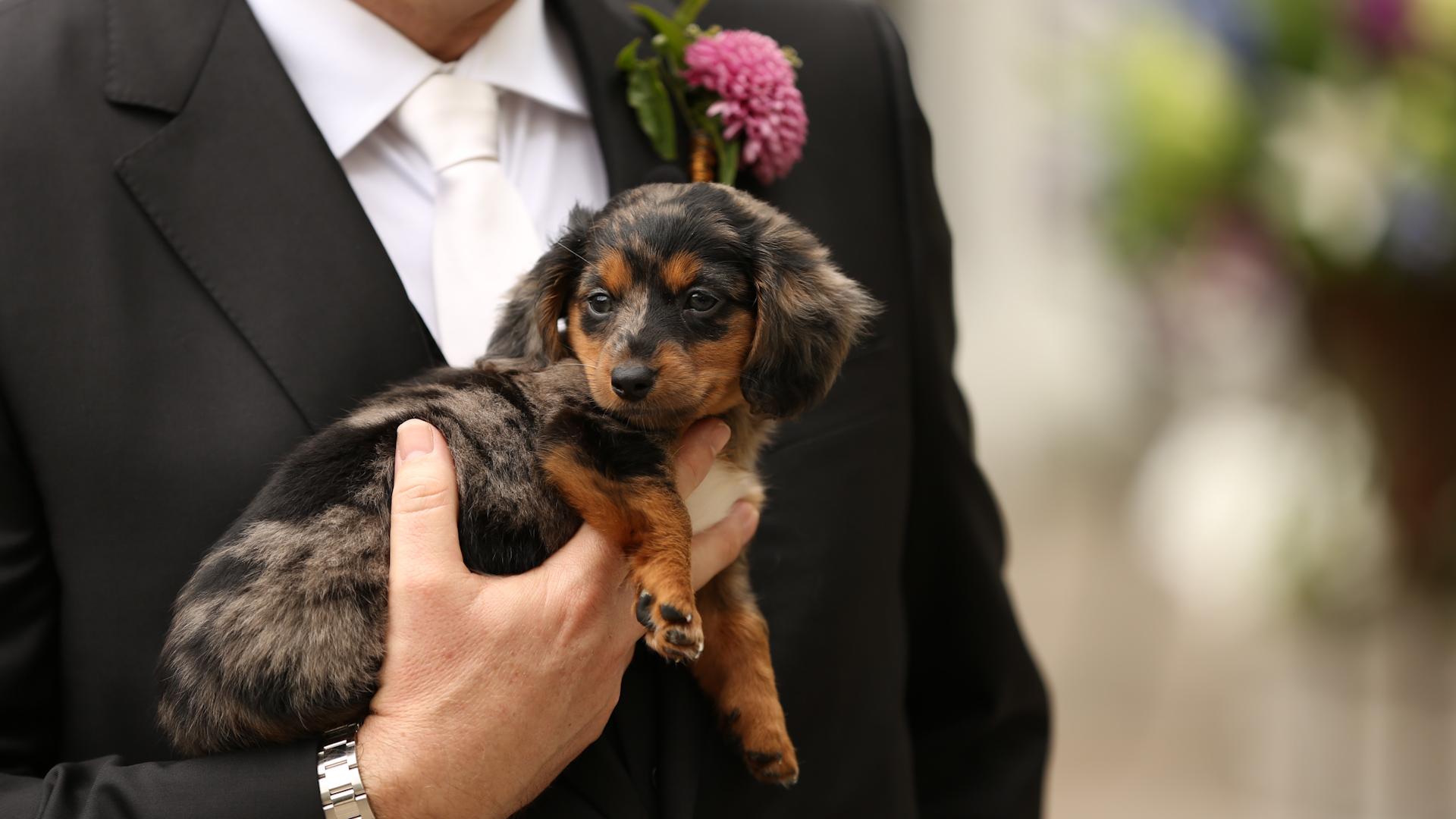 Puppy- Bride Film