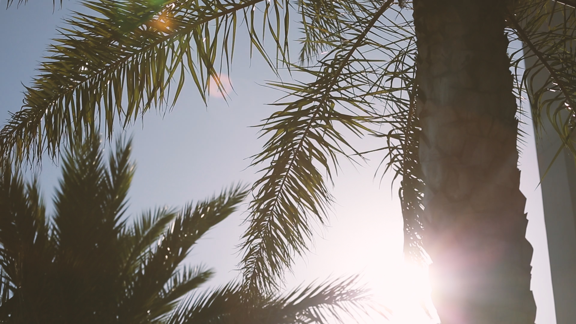 Palm Trees at Cuvee 30a - Bride Film