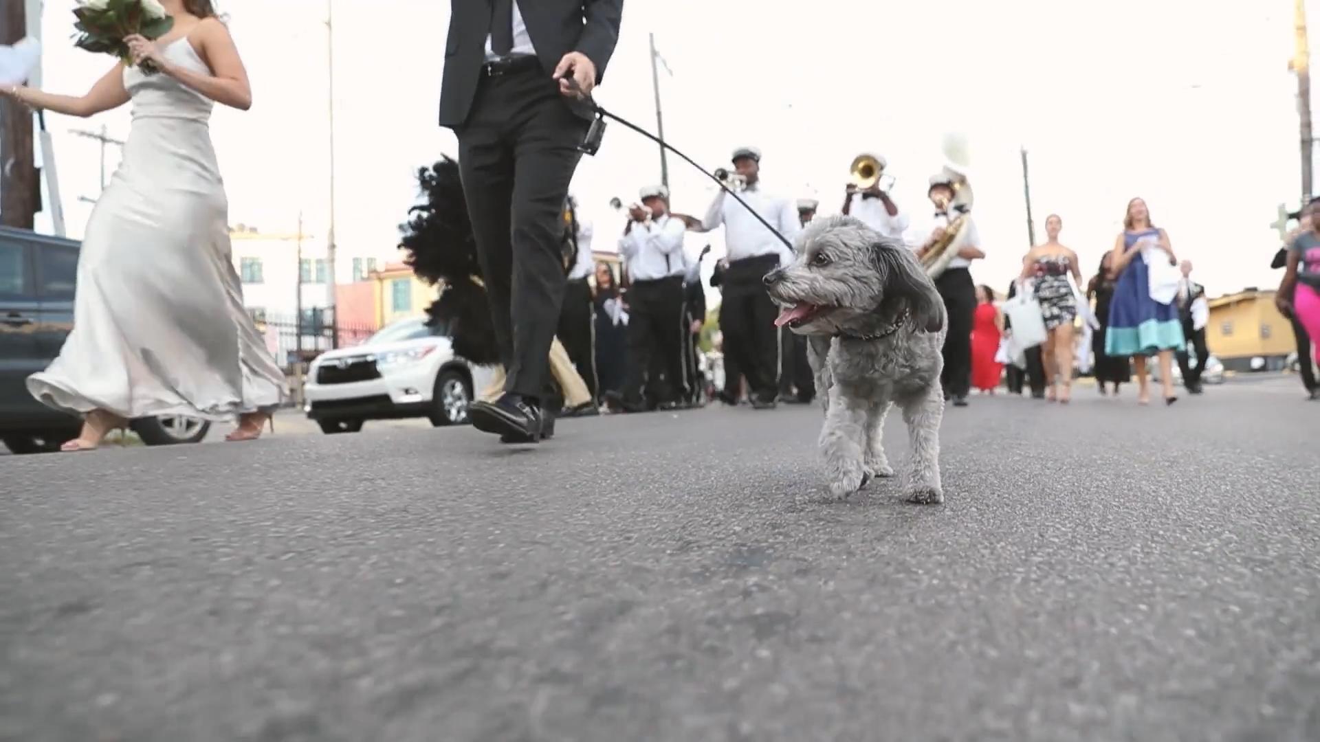 New Orleans Wedding - Puppy Second Line - Bride Film