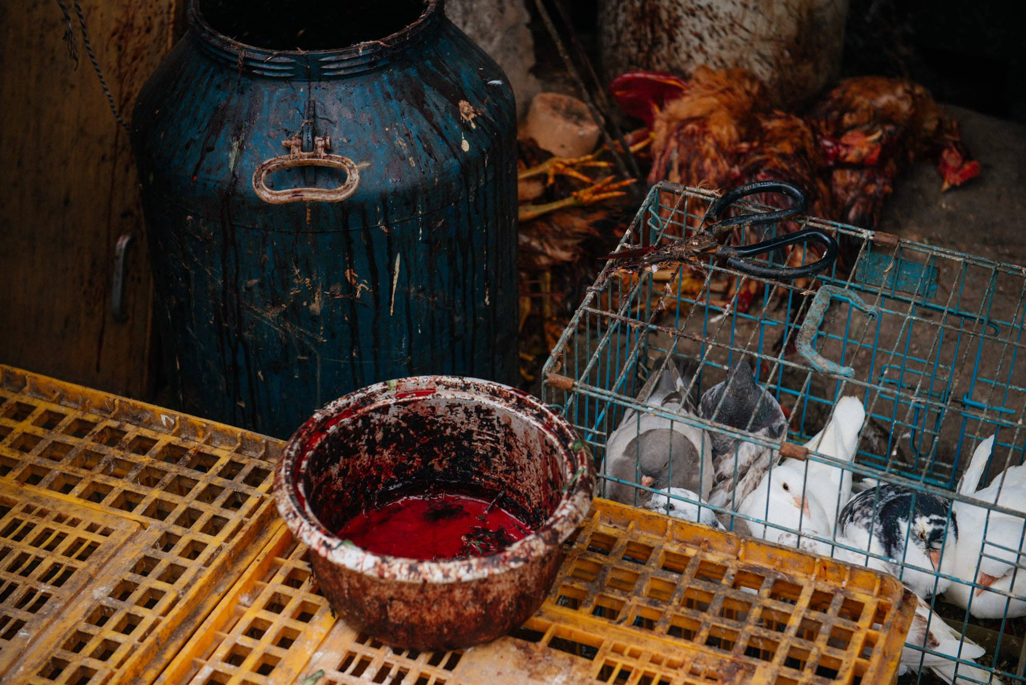 A bucket used to drain the blood of birds sits on a crate beside several dead chicken and a cage of doves. A few ducks, that have their legs tied, wait still on the ground, as if they thought that if they were quiet the woman wouldn't notice them.