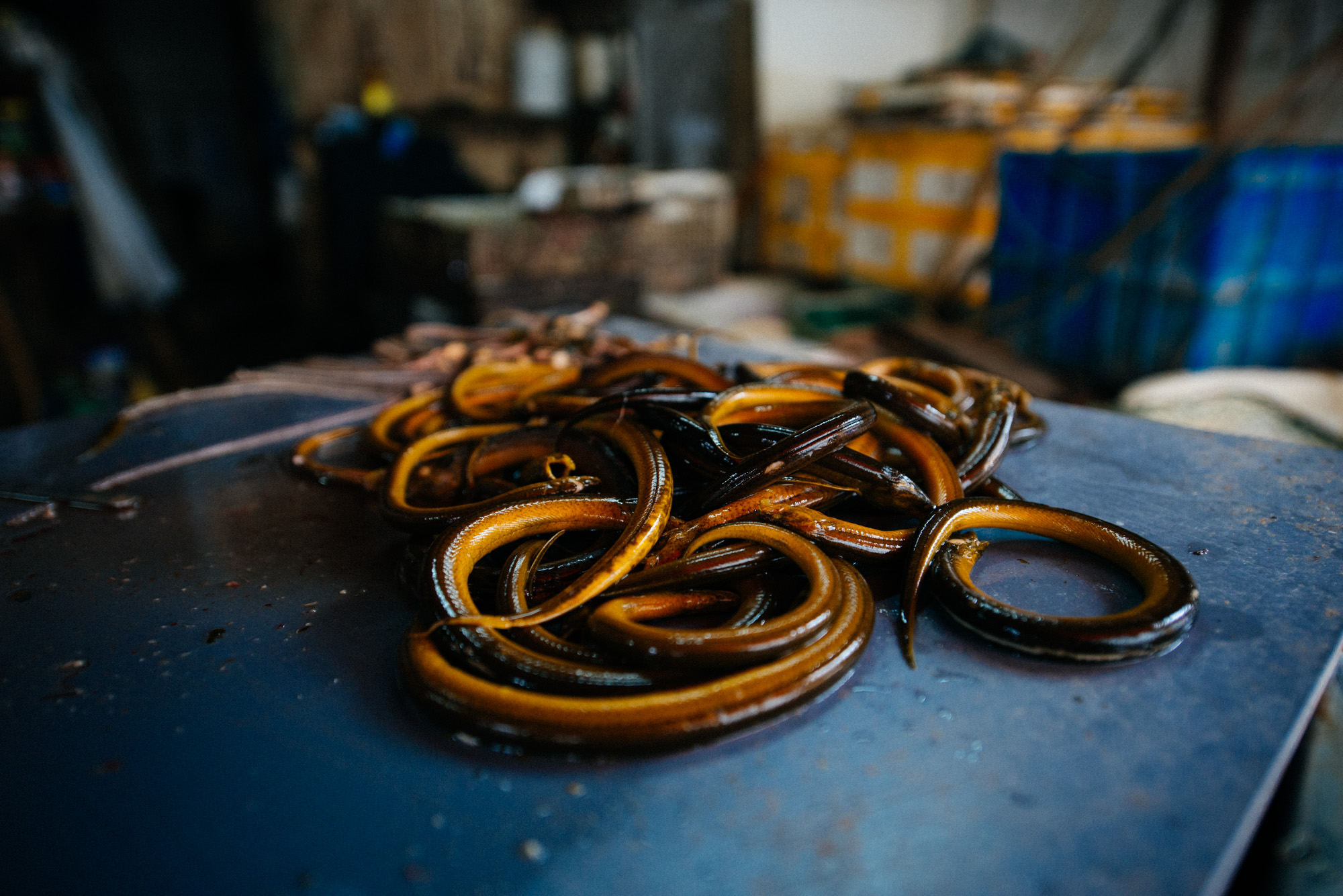 Further down the road a woman, who also had live eels, would fry the animals and sell them ready for consumption.