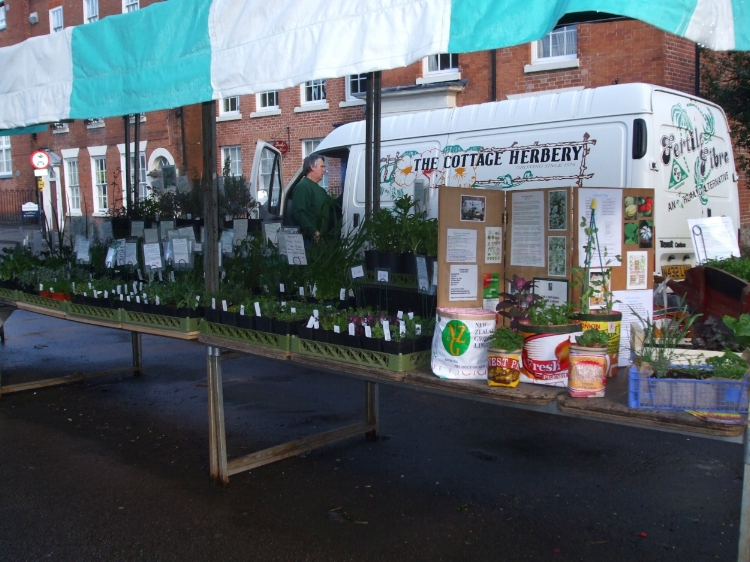 Our stall full of quality naturally grown plants.